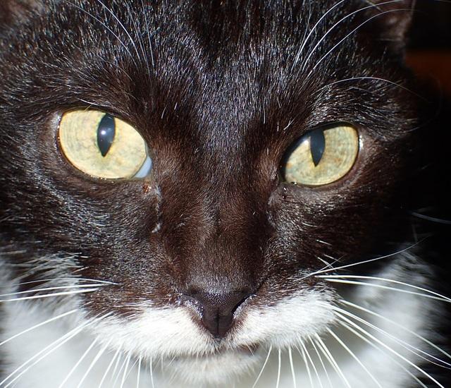 細めの黒目