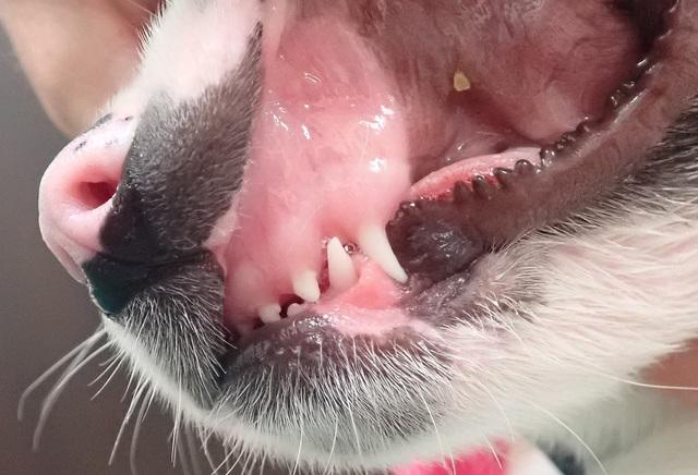 貧血が改善した後の歯茎の色、ピンク色になってきました
