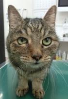 猫ちゃんのリンパ腫治療
