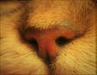 鼻の穴 ~短頭種気道症候群~