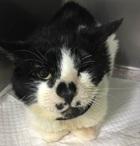 交通事故の猫ちゃん 顎の脱臼