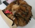 当院の2代目看板猫のご紹介